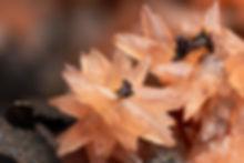 Rhodochrosit Louise BB 6,5 mm Stefan Huc