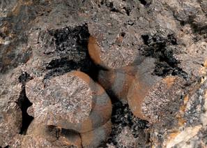 Lepidokrokit Friedericke BB 26 mm Reinha