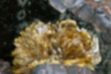 Pattersonit Louise BB 5,8 mm Eckhard Sch