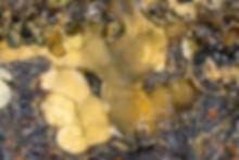 Pattersonit Louise BB 6,5 mm Eckhard Sch