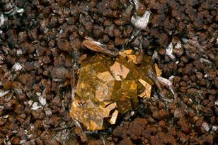 Pyrit auf Siderit Steimel BB 3 mm Reinhardt 23-15-08 Reinhardt.jpg