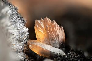 Rhodochrosit Wolf BB 5 mm Matthias Reddehase 16-27-02 Reinhardt Mineralienfotografie.jpg