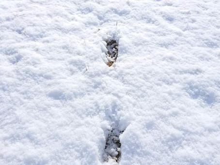 動物の足跡