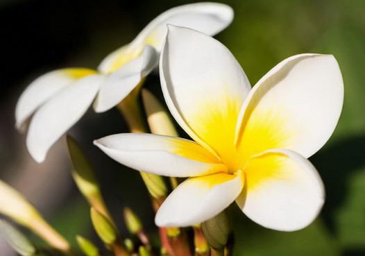 einen_wunderschönen_subtropischen_Garten