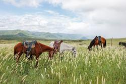 Peaceful Highland Meadow