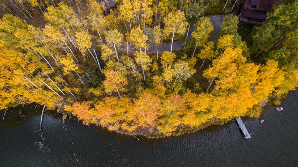 Autumn Near Telluride
