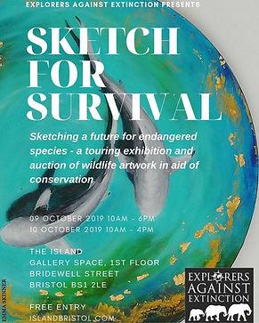 sketch for survival, under water art, duba, animal portrait, shark, dolphin