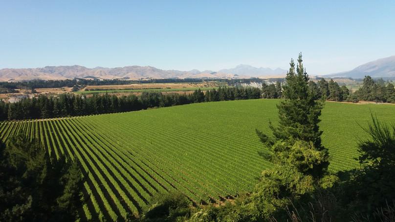 Vineyards_3.jpg