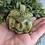 Thumbnail: Carved Crystal Pumpkins