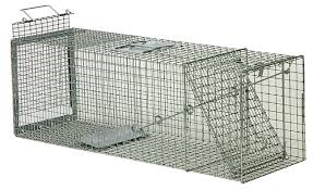 cat+trap.png