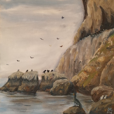 Birds on the Little Orme