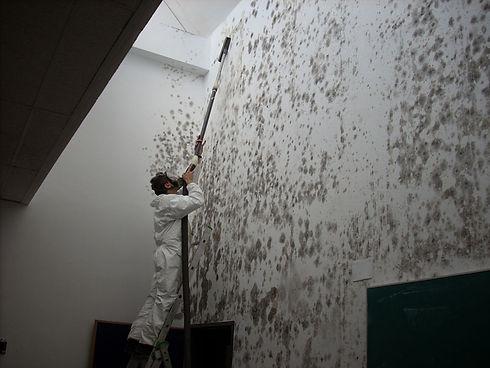 mold-2.jpg