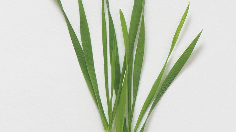 Wheatgrass 4 OZ