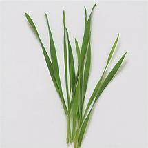 wheatgrass_edited.jpg