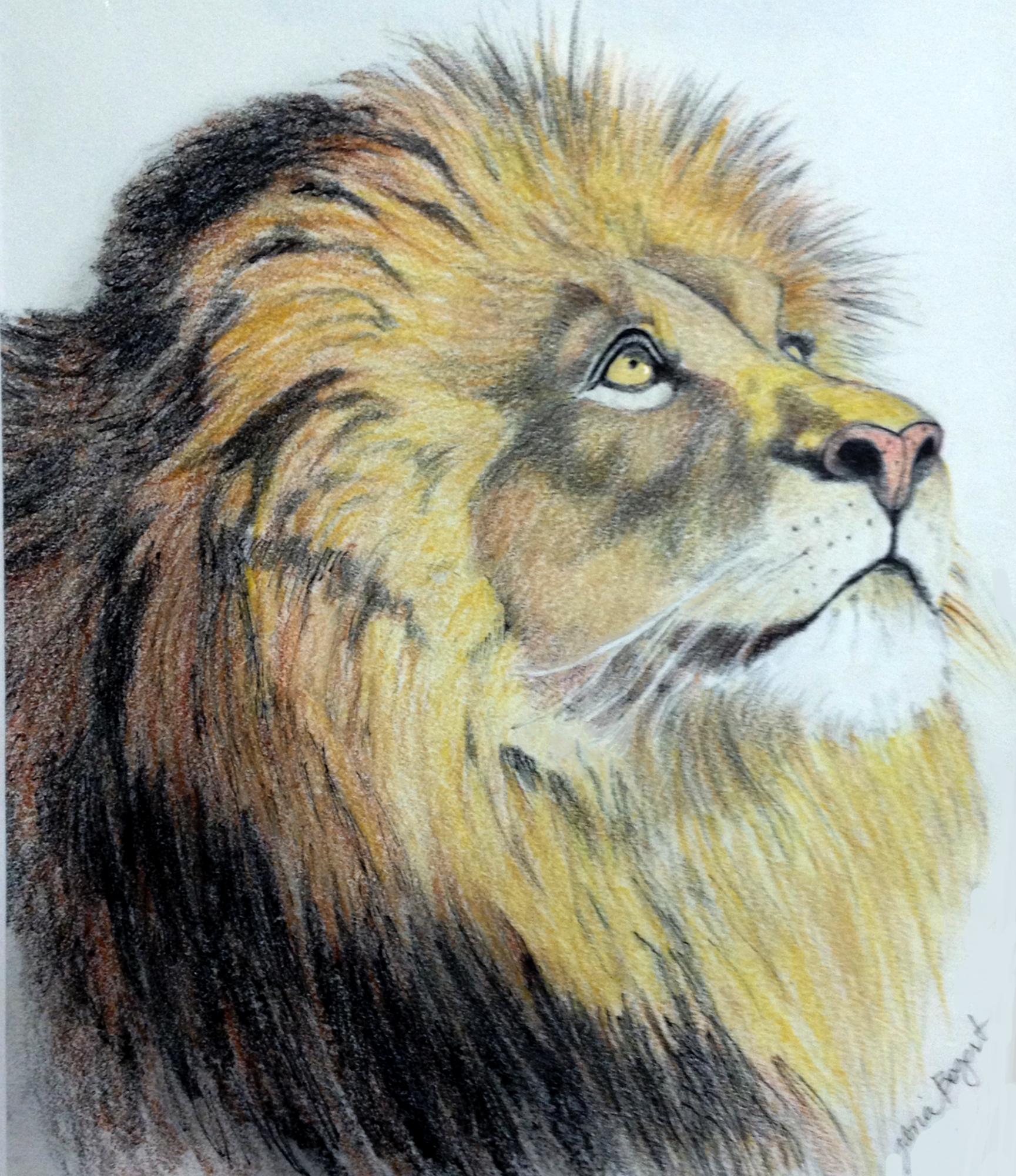 lionpraying.jpg
