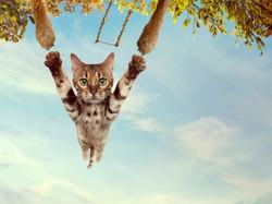 Metacam cat Trapeze
