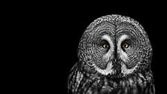 AlanGray_owl_edited.jpg