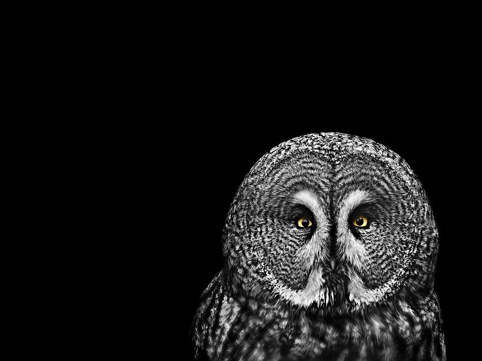 AlanGray_owl.jpg
