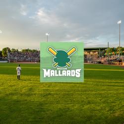Madison Mallards