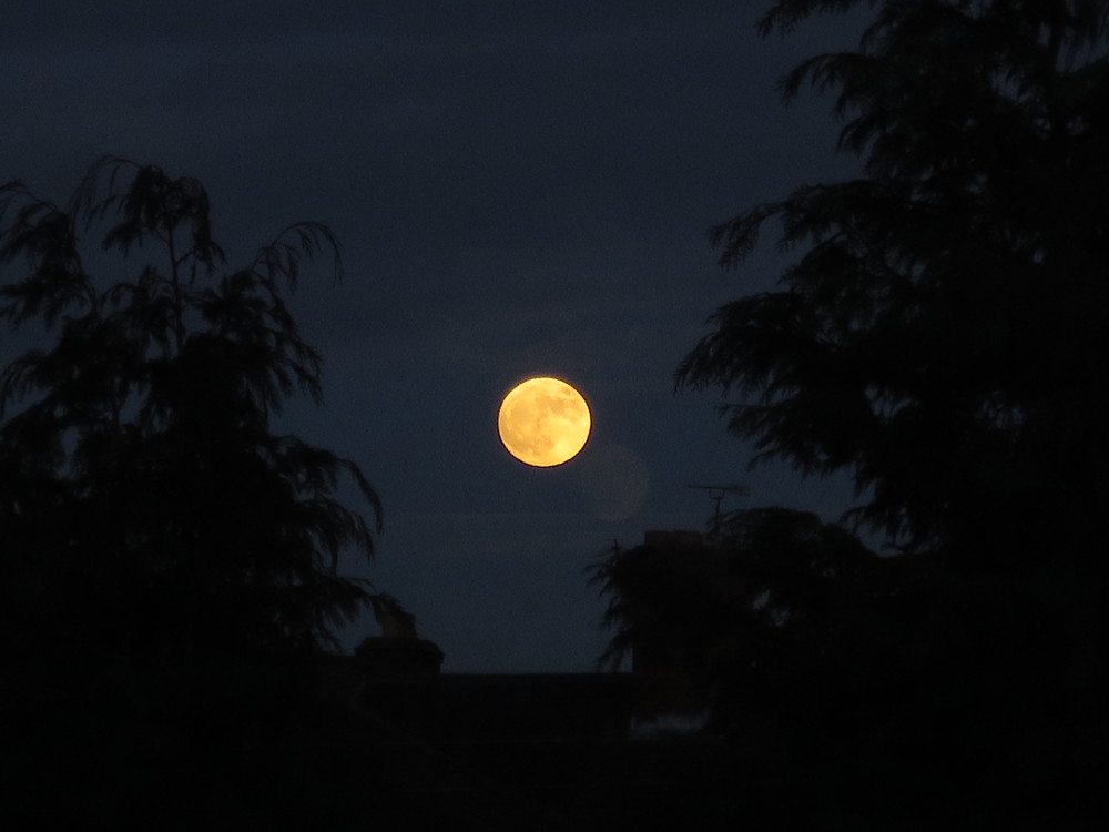 An image of a Full Moon placed in between the shadows of two trees.