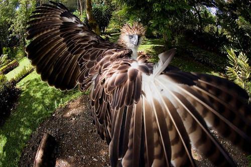 16 - phil eagle 1.jpg