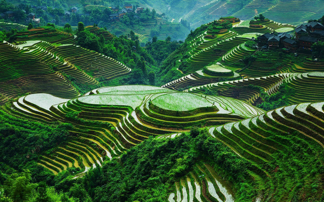 14 - rice terraces 2.jpg