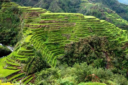 14 - rice terraces 1.jpg