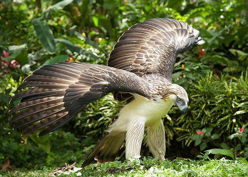 16 - phil eagle 2.jpg