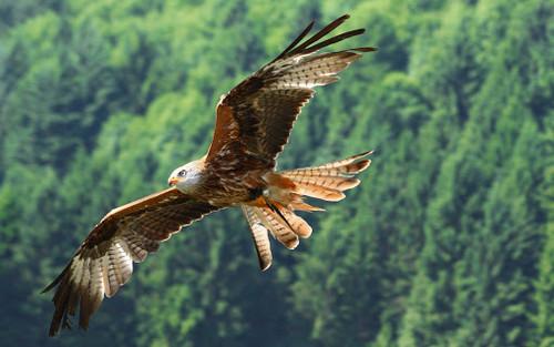 16 - phil eagle 4.jpg
