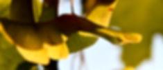 sycamore seeds 2 x 1750.jpg