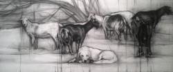 hayvanlar çizimi