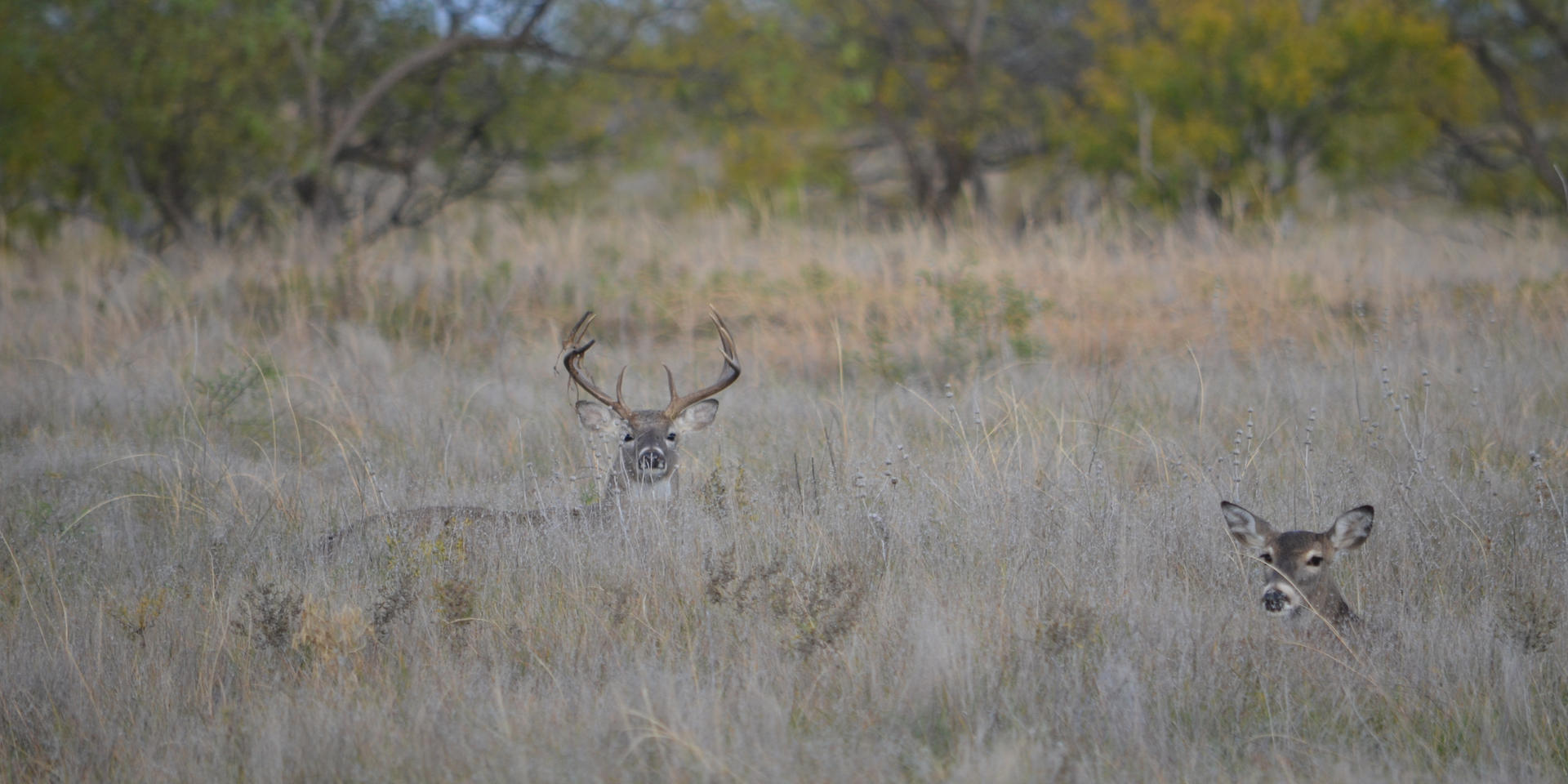 Wildlife Buck with Doe.jpeg