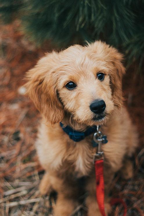 puppy training and walks.jpg