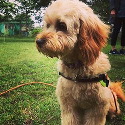Beginner Puppy Training.jpg