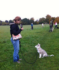 puppy training in the park