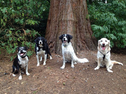 All breeds and sizes