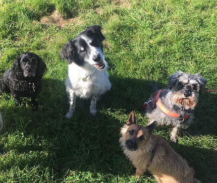 Group Dog Walks.jpg