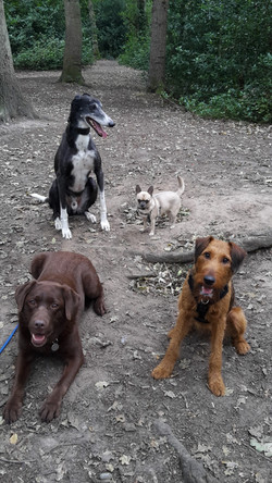 Small to large breeds