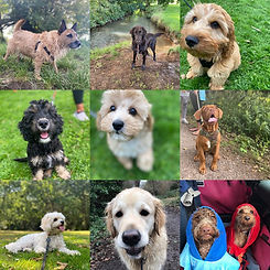 No matter the breed or size we have a food to meet your dogs needs