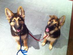 PuppyTraining Classes