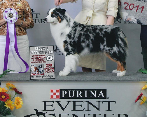 2011_Izzy_AKC_Nationals_1WEB_pic.jpg