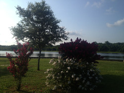 An Oak Island Summer