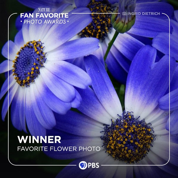 PBS Nature, Best Flower