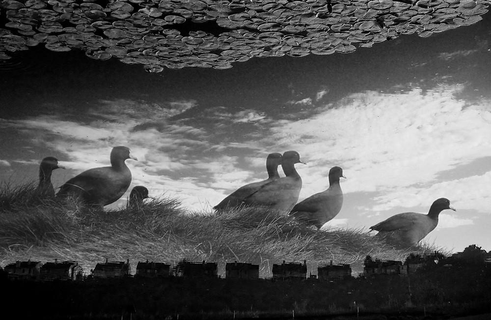 Black and white composite