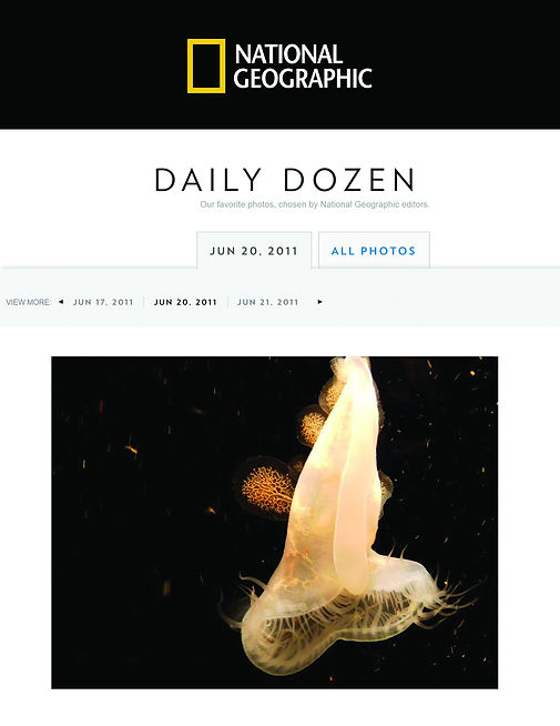 Photo of a jellyfish by Ingrid Dietrich, published by National Geographic, 2011