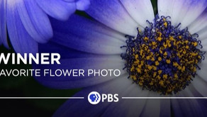Ingrid Dietrich, winner of two categories in PBS Nature photo contest!