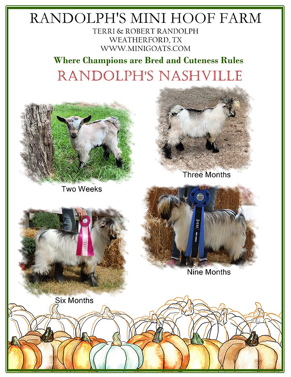 Randolph's Mini Hoof Farm Show Sponsor 2021.jpg