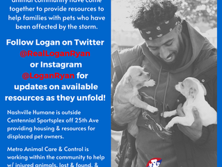 Ongoing Resources for Nashville Pets & People