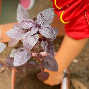 Mão de criança mexendo na horta da escola