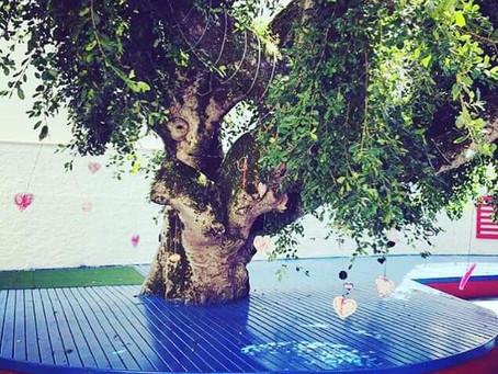Carta da Árvore dos Desejos